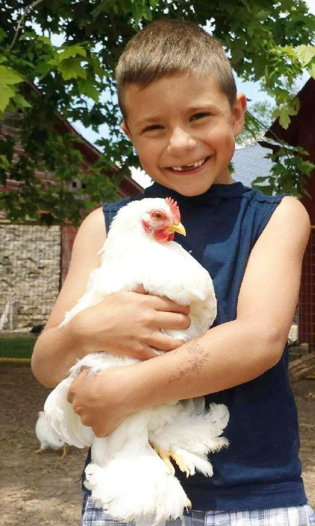 Diggy w/ chicken